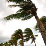 palm trees blowing in hurricane winds, which are conditions that may create a need for an air conditioning repair service